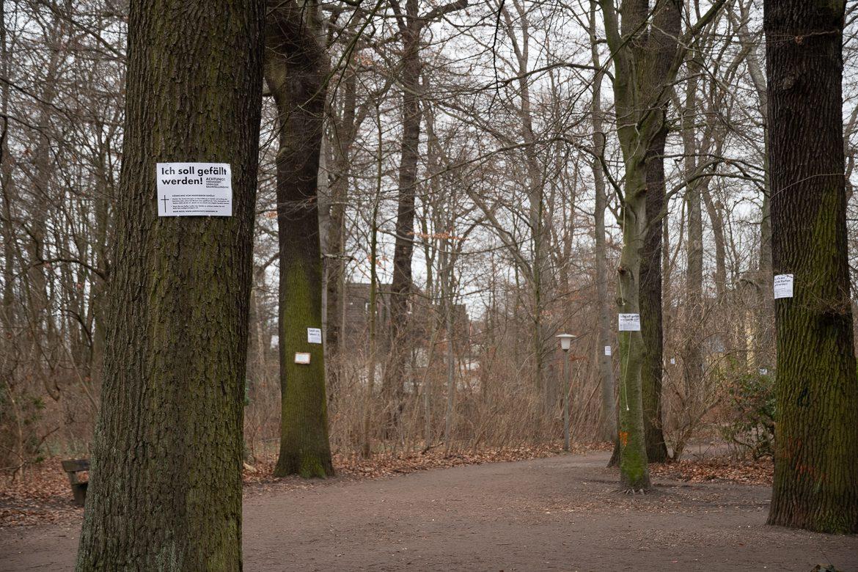 Im Wandsbeker Gehölz hat es bislang noch keine Baumfällungen gebeben. Hier sollen für Baustellenzufahrten 30 größere Bäume fallen. Eine Anwohnerinitiative protestiert mit Plaketen dagegen.